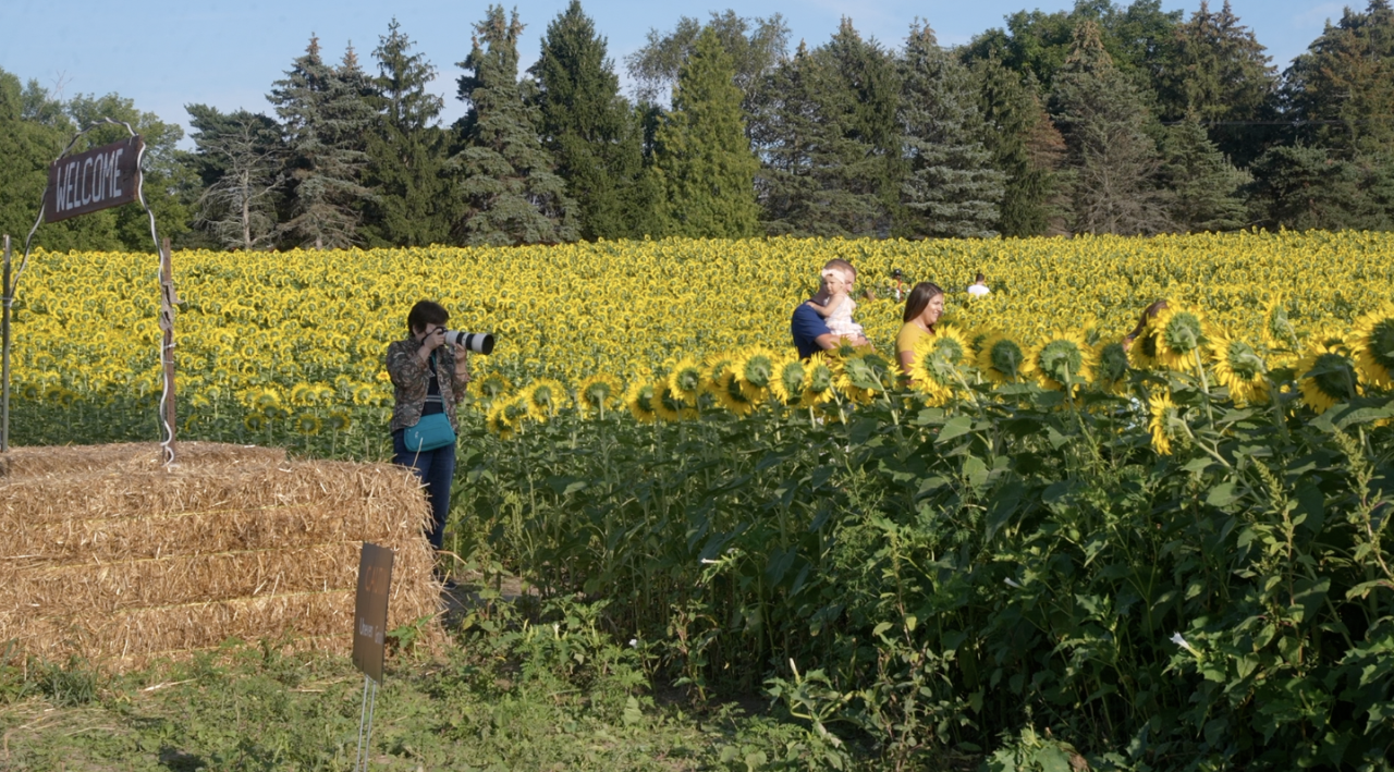 Munsell Farms' sunflowers attract between 7,000 and 8,000 people each year