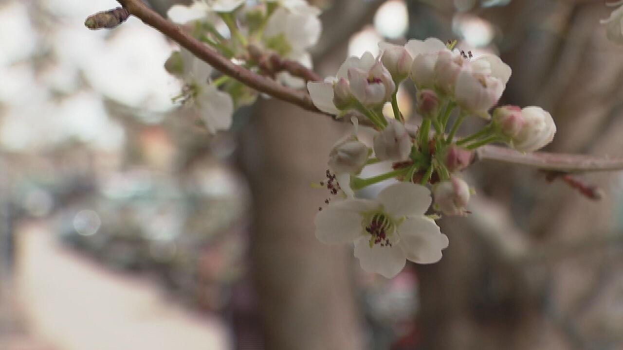 Canon Blossom Festival