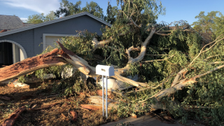 Glendale monsoon tree damage