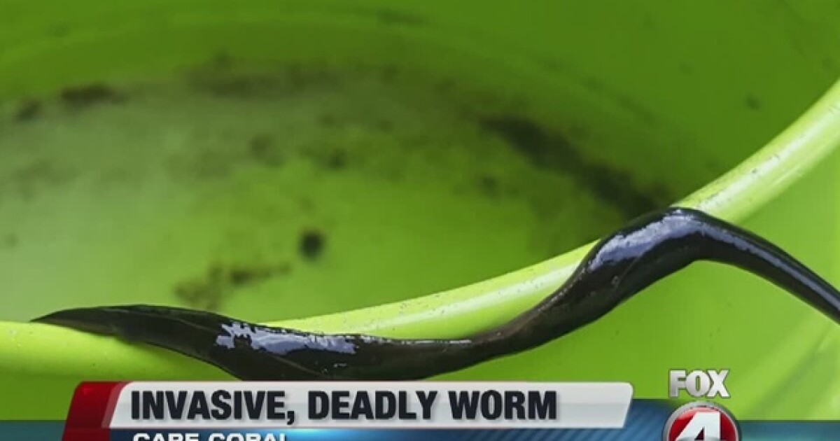 Invasive, dangerous worms found in Cape Coral