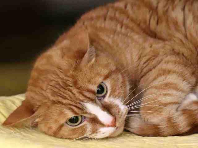 Adoptable pets from Arizona Humane Society and Maricopa County Animal Care (10/23)