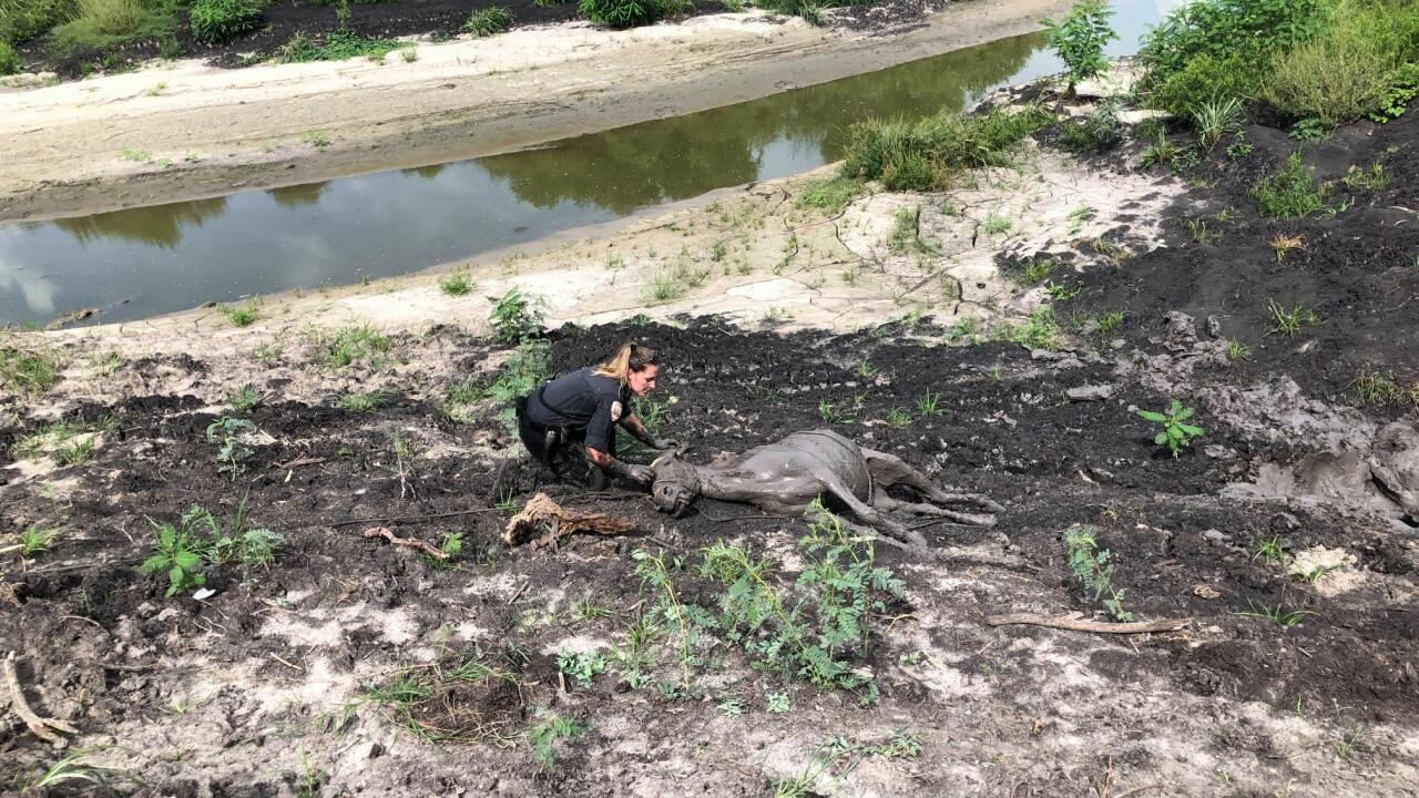 Donkey trapped in mud