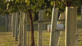 GROW Enrichment creates Nashville's first public food forest