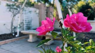 Botanical gardens Largo