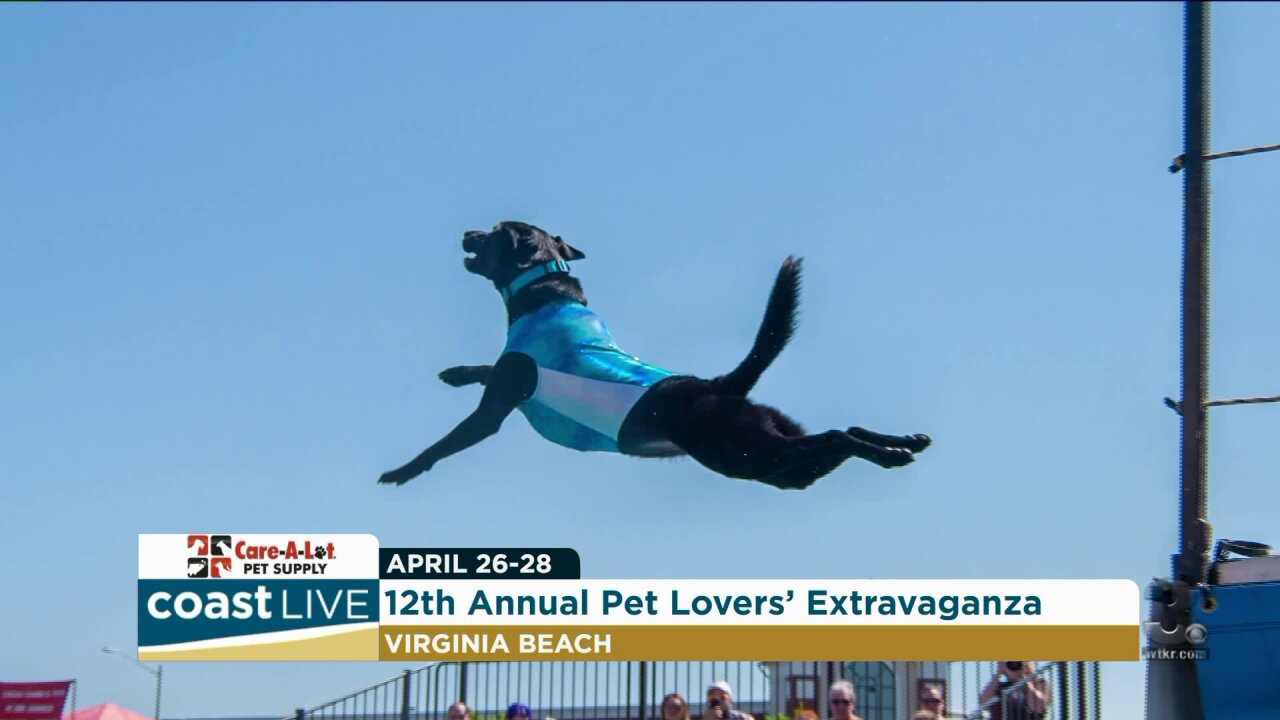 A competitive dock-diving dog gets us ready for The Pet Lover's Extravaganza on CoastLive