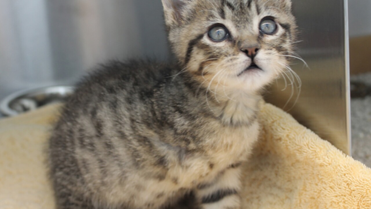 Kitten loses leg, but survives dog attack