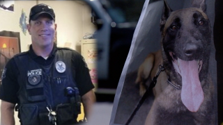 Jesse the Mesa K-9 that died