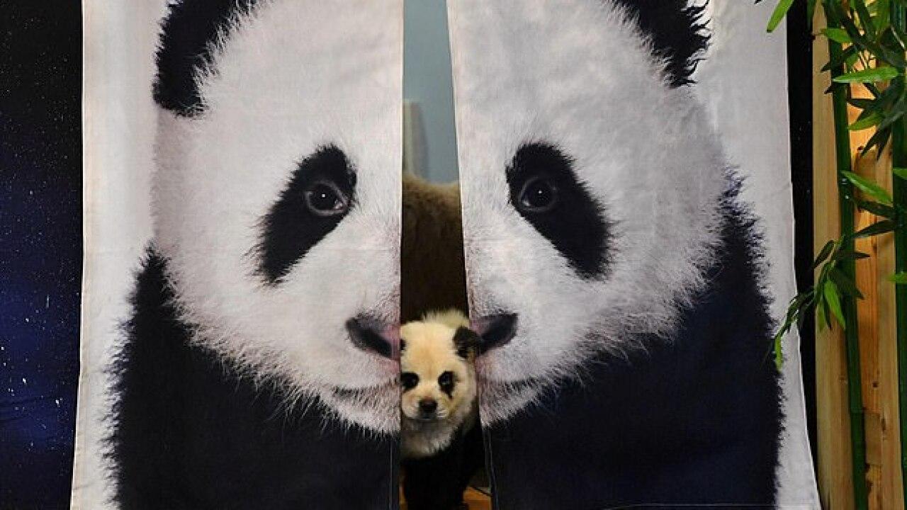 panda cafe pic.jpg