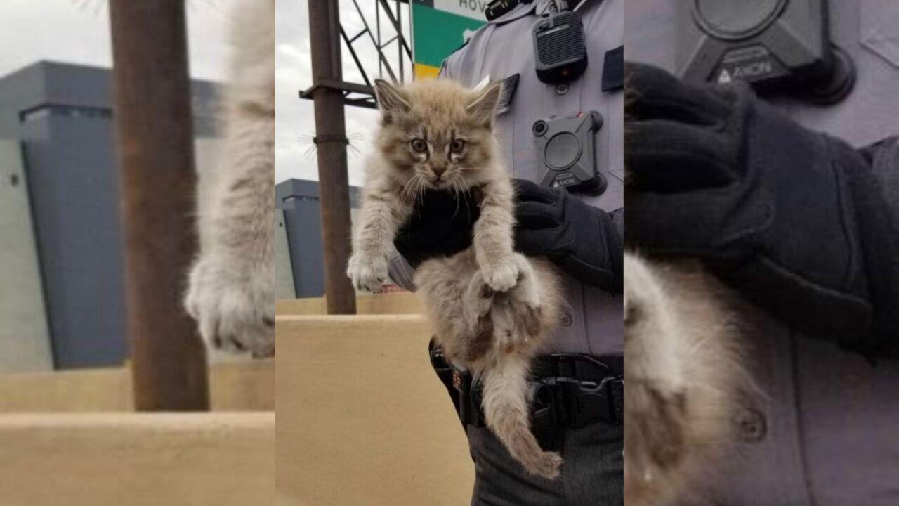 Rescued cat_NHP.jpg