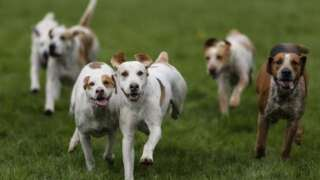 KCAS offering free Parvo/Distemper vaccinations after Distemper outbreak