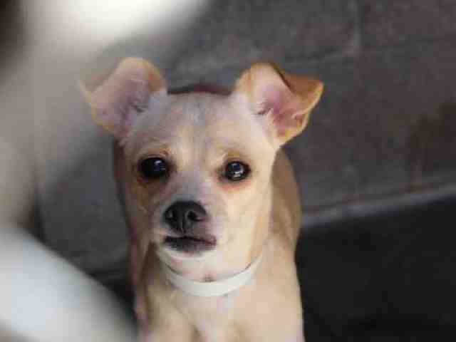 Adoptable pets from Maricopa County Animal Care and Control (9/28)