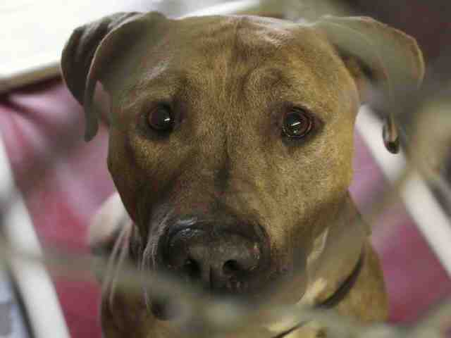 Adoptable pets from Maricopa County Animal Care and Control (4/25)
