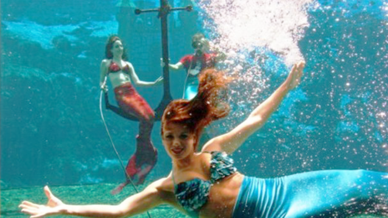 Weeki Wachee looks for new mermaids