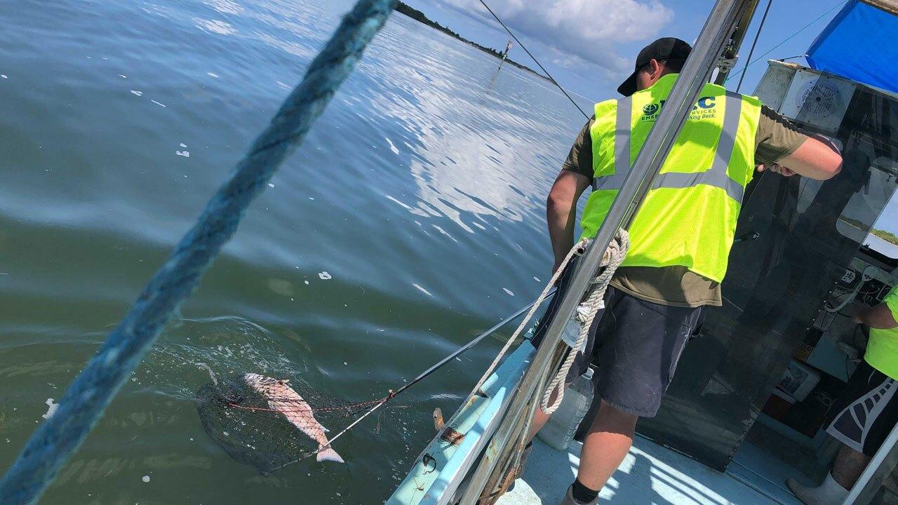 boat-crews-clean-red-tide-1-WFTS-HOLLENBECK.jpg