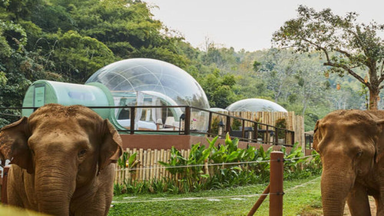 You Can Sleep In Clear 'jungle Bubbles' Surrounded By Rescue Elephants In Thailand