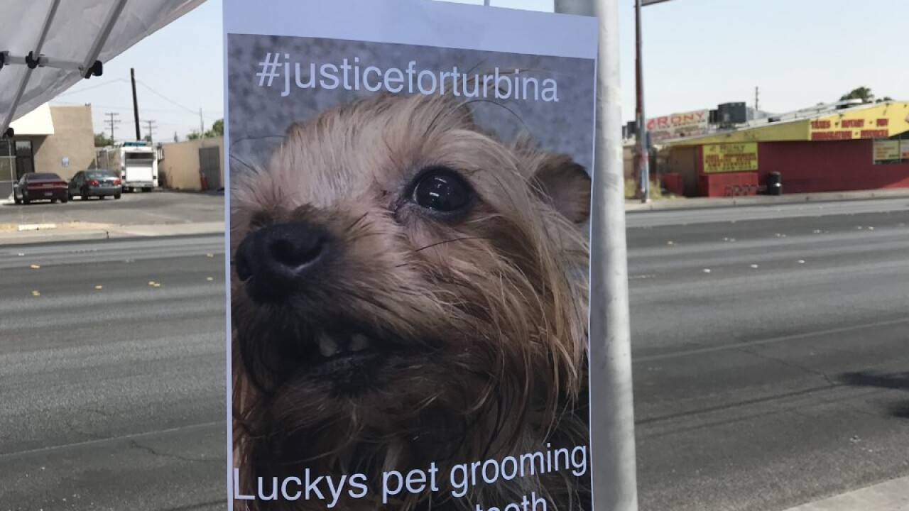 Cosmo and Turbina were allegedly choked by two different groomers