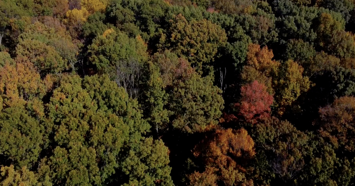 Climate change impact on fall foliage emerging - WKBW-TV