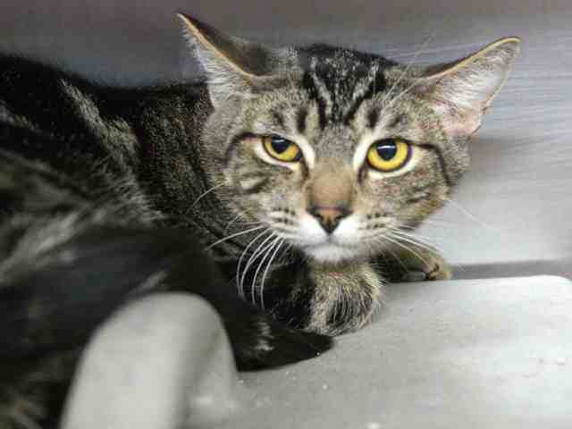 Adoptable pets from Maricopa County Animal Care and Control and Arizona Humane Society (12/13)