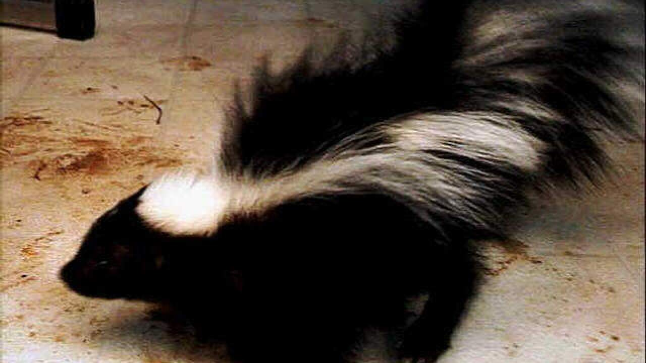Oakland Co. Health Division reports confirmed case of rabies in skunk