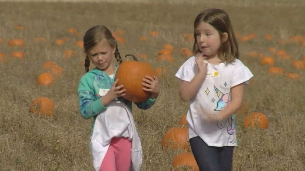 Venetucci Farm's Pumpkin Giveaway wraps up this week.