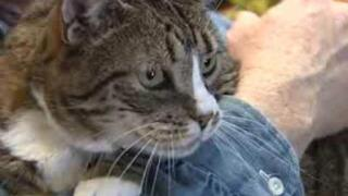 Grand Junction wants to curb cat overpopulation, so they're hosting a free spay/neuter weekend