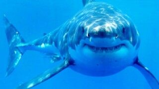 Surfer killed in sharkattack