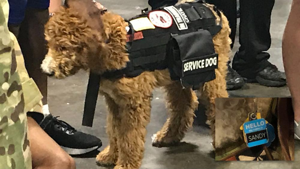 warrior-game-service-dog.png