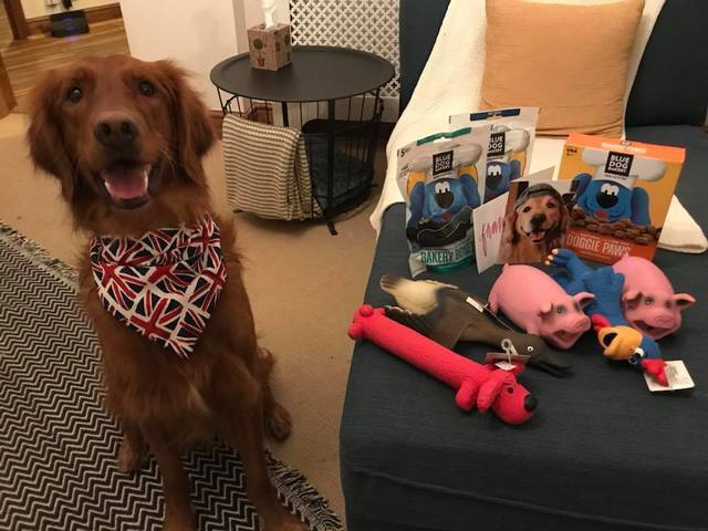 PHOTOS: Meijer team helps local dog adjust to life across the pond