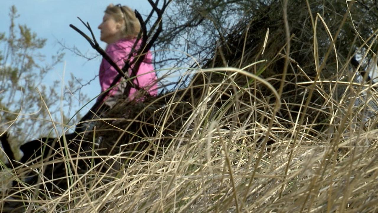 Dangers of buffelgrass during wildfire season