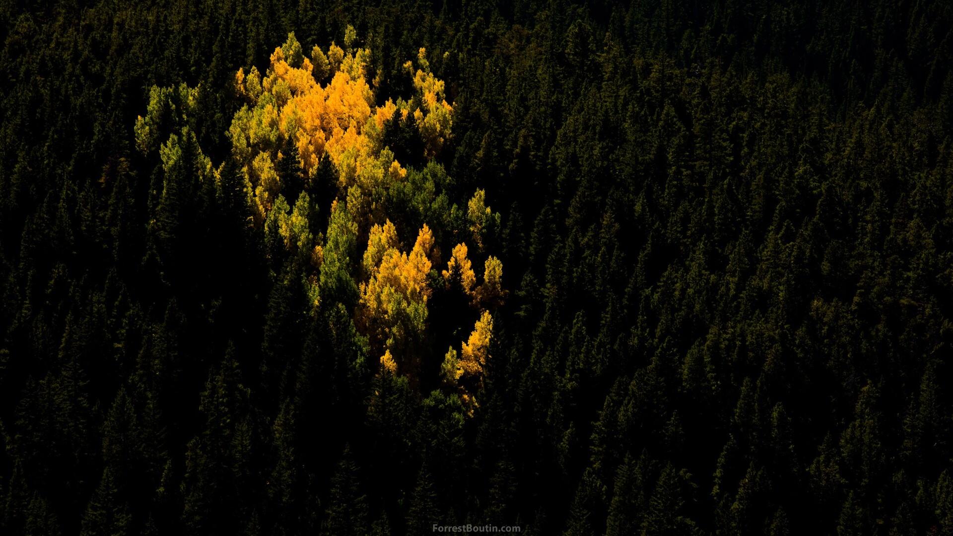Aspens Forrest Boutin Photography.jpg
