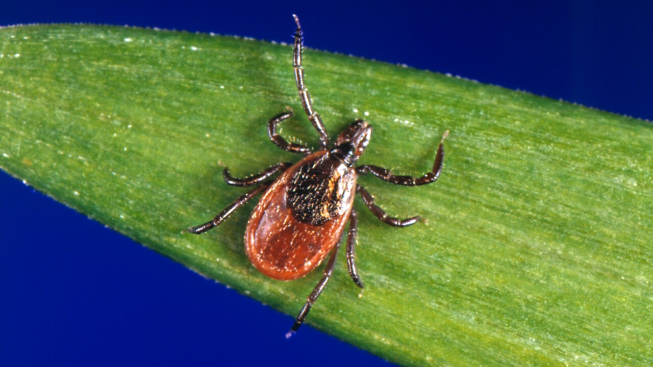 Mild winter could make this year's tick season especially tough, experts say
