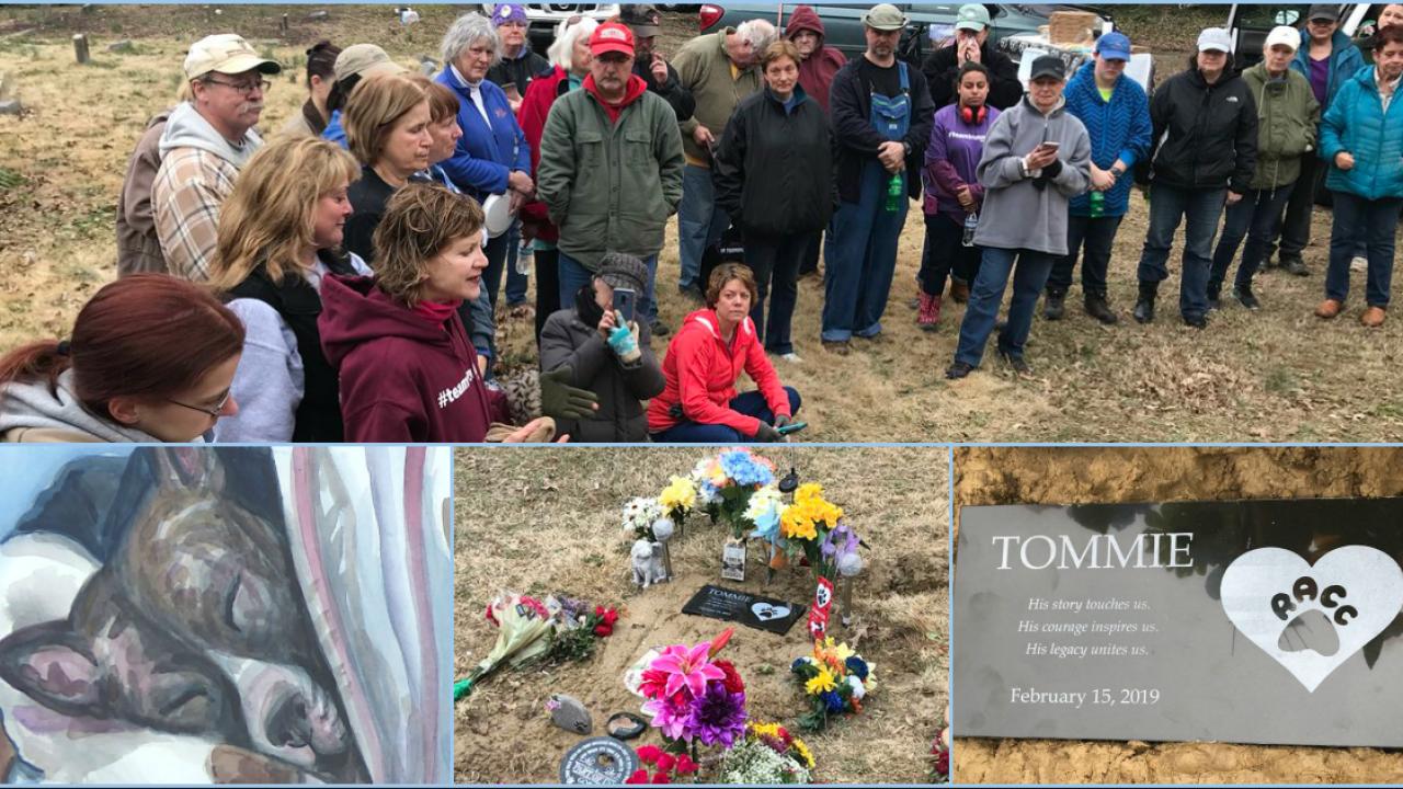 Team Tommie volunteers spruce up pet cemetery where beloved dog isburied