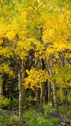 Fall Colors 2017: See photos as the leaves change throughout the state for fall season
