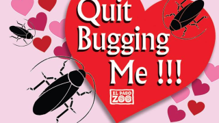 Quit Bugging me