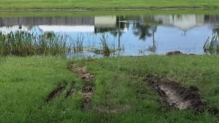 Tire tracks where car crashed into pond