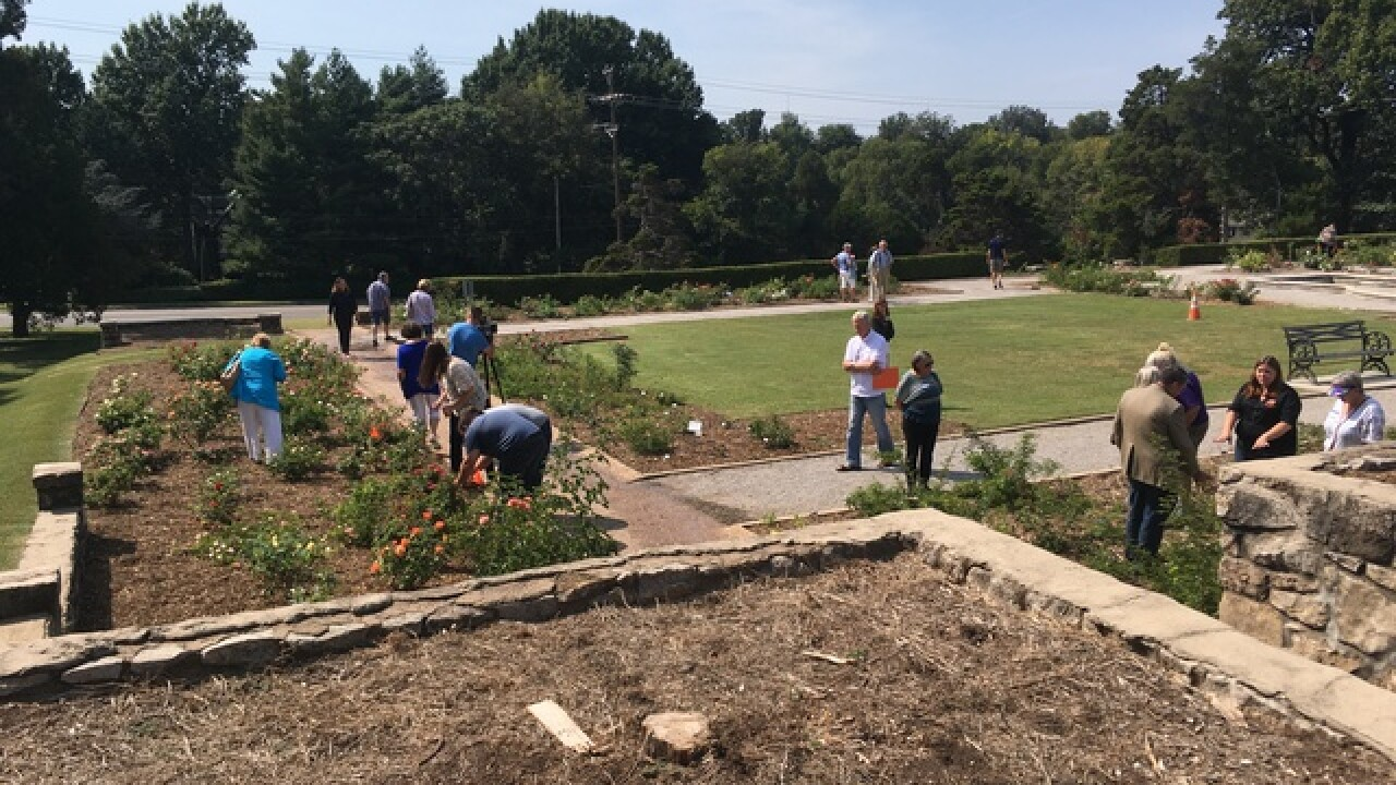 Tulsa's Rose Garden makes a recovery after it was destroyed by rare disease