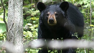 Bear kills dog in Shenandoah National Park