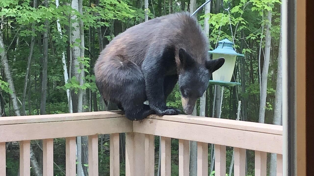 BEAR in Suamico