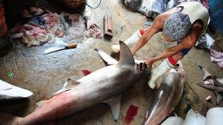 wptv-shark-fins.jpg
