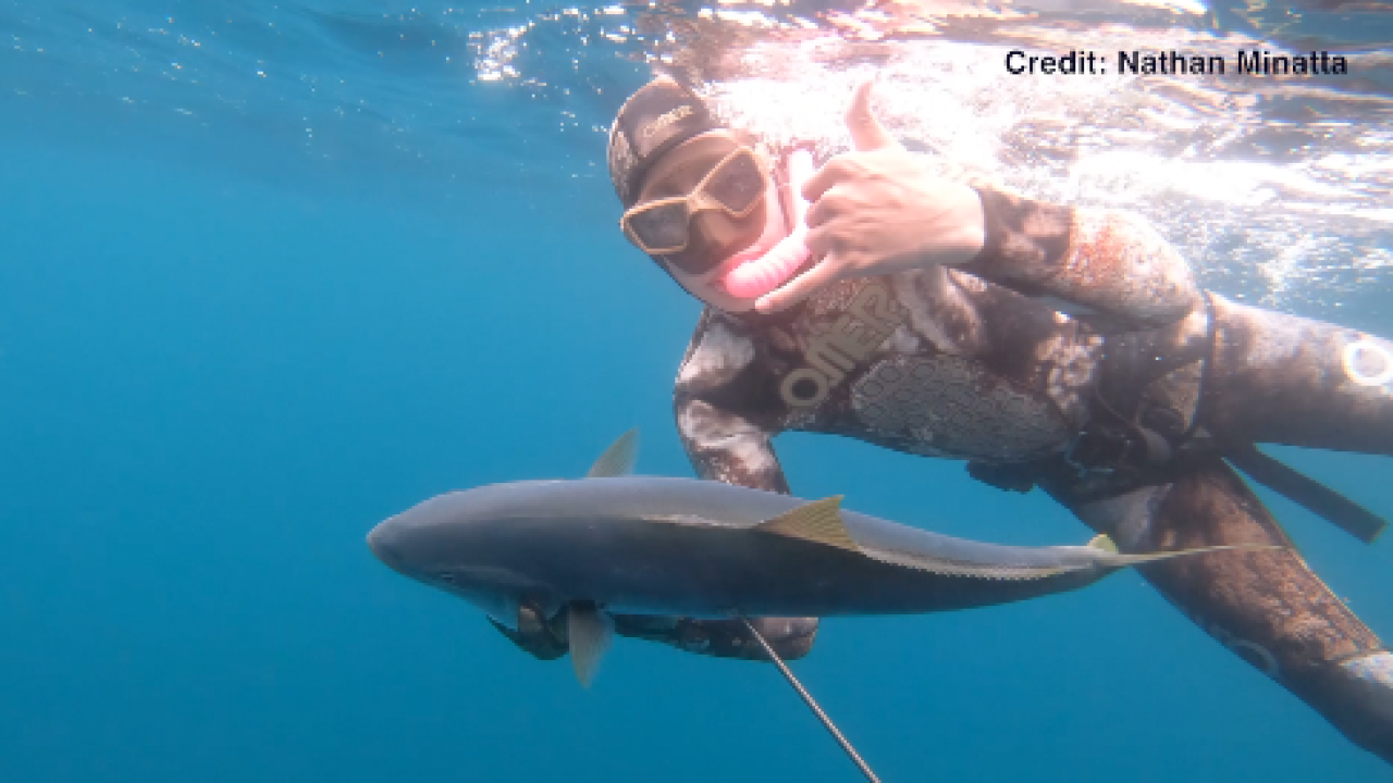 Shark attack survivor returns to the ocean for spearfishing