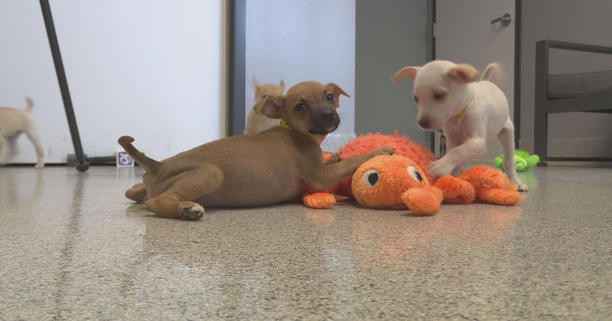 Humane Society saves 19 dogs from kill shelter