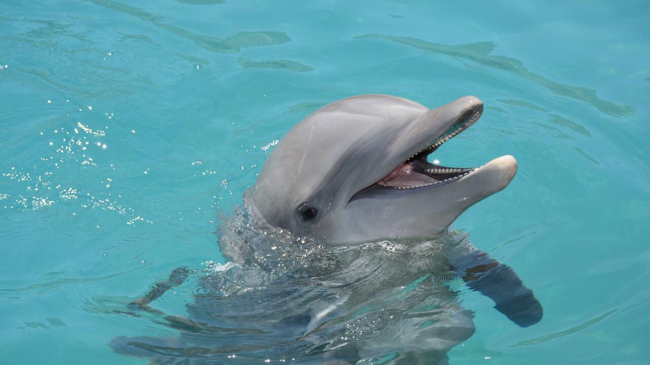 Dolphinaris Khloe