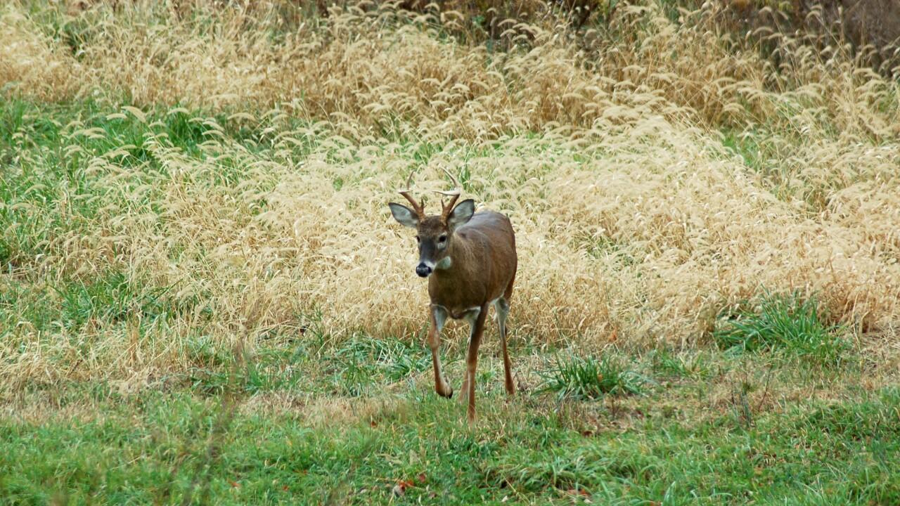 deer season.jpg