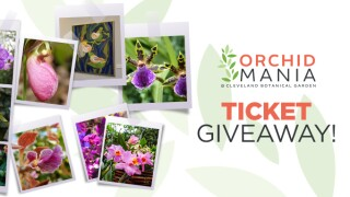 Cleveland Botanical Garden Orchid Mania Sweepstakes