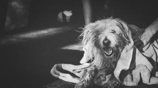 dog-towel.png