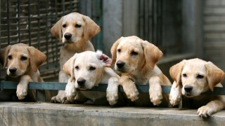 Puppies may be making people sick, CDC says