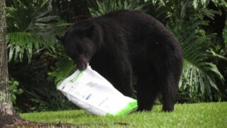 Photos: Bear sleeps off food coma after eating dog food