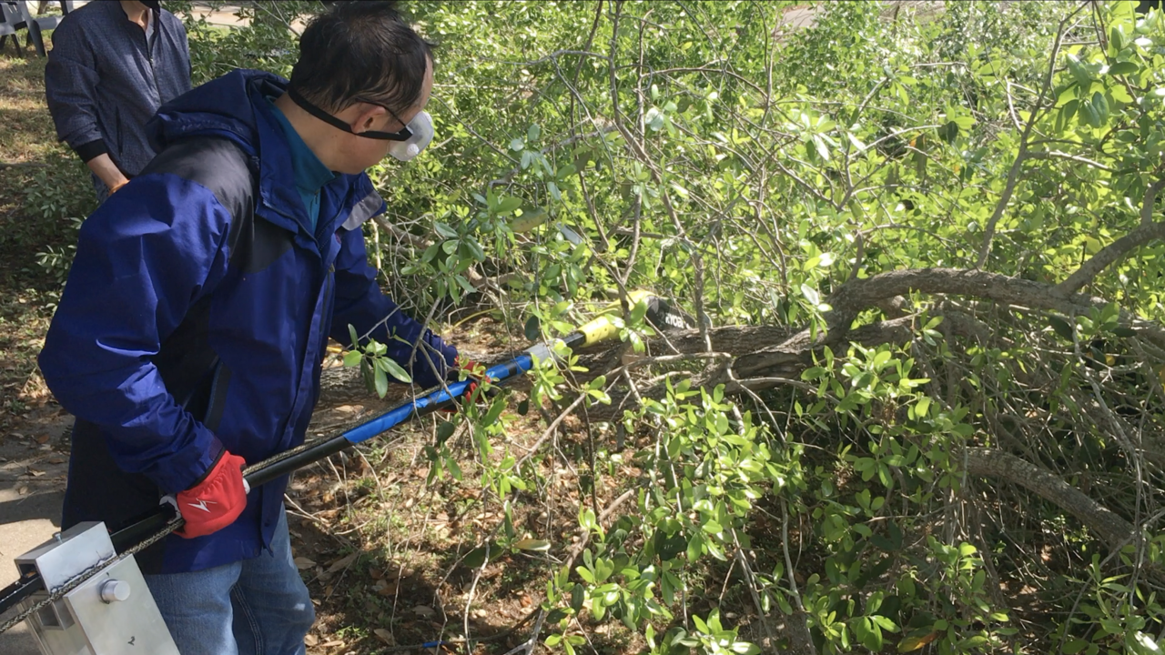 Professor's tree service provides free trimming to those impacted by COVID-19, deep freeze
