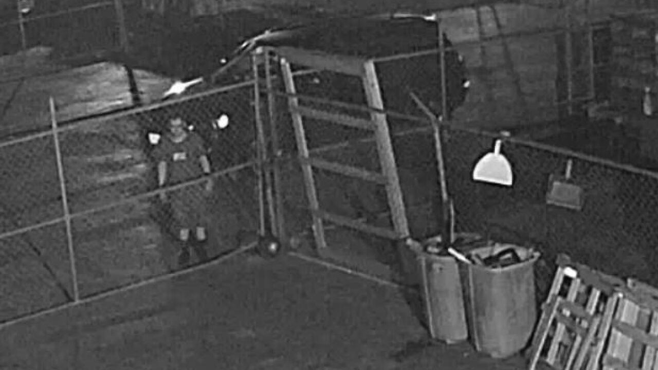 Copper thief surveillance 2.JPG