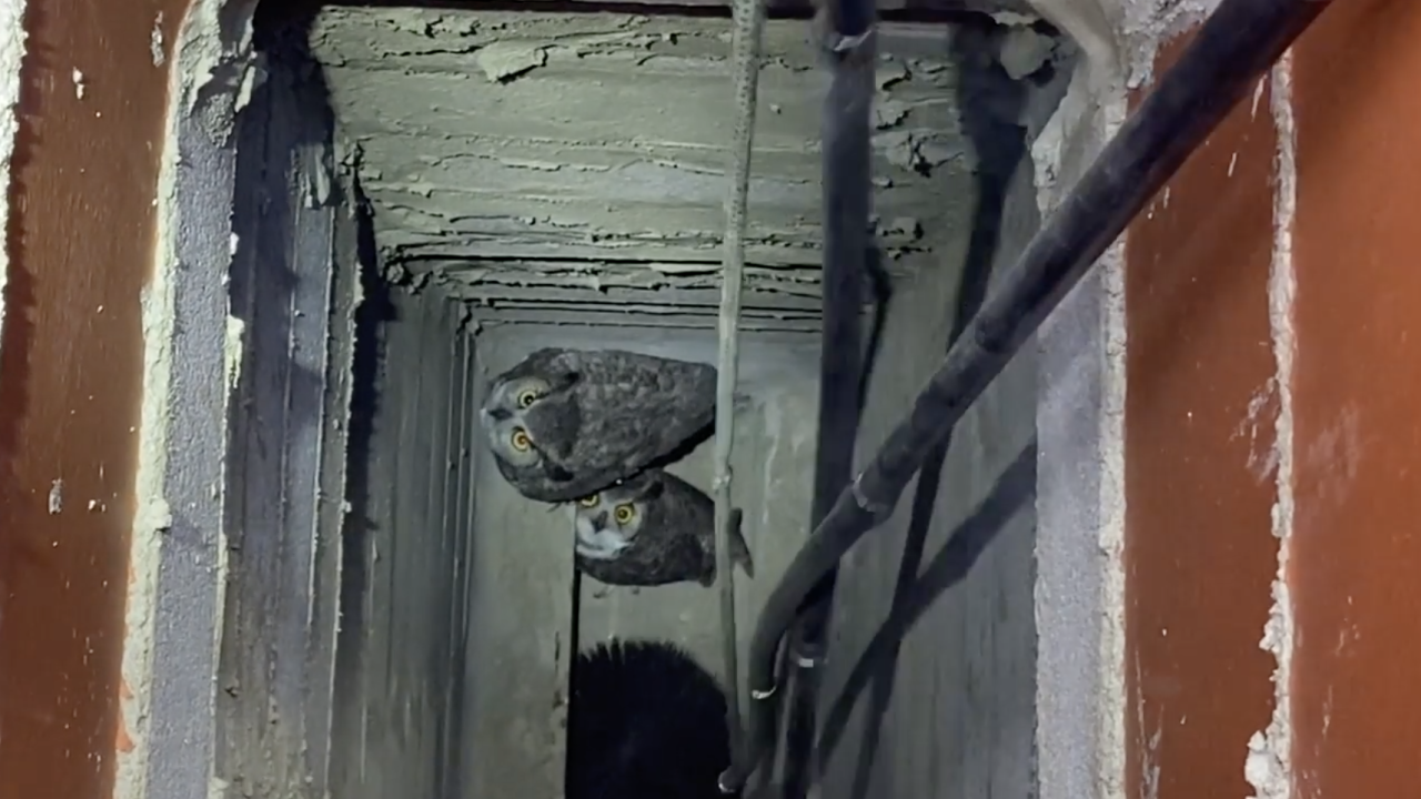 Owls rescued from chimney in Scottsdale